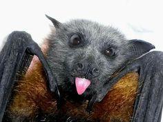 bat-smile